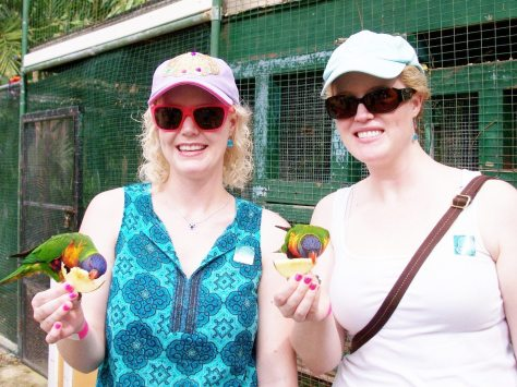 Feeding the Lorakeets, aka Rainbow Lory Parrots.