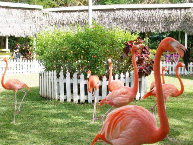 Flamingoes on parade.  Beautiful birds!!