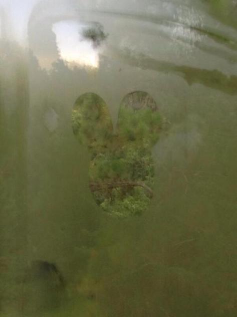 Hidden Mickey on the monrail window.