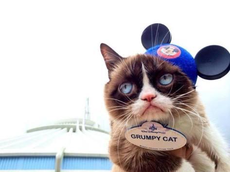 Grumpy Cat at WDW