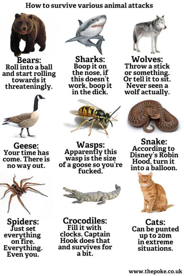 How to deal with animal encounters in Florida!!