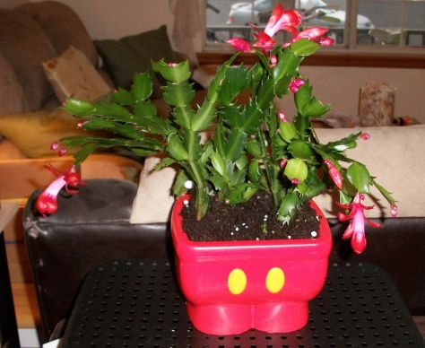 It's the perfect planter for our Christmas cactus!