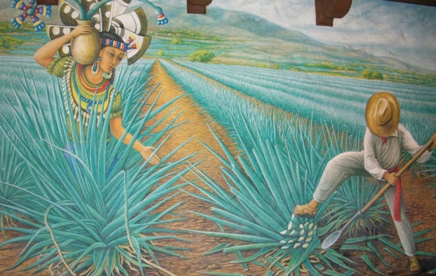 The story of the agave plant and tequila in murals on the wall.