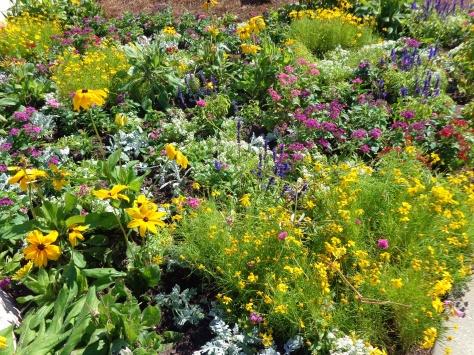Wildflowers in bloom and butterflies everywhere.