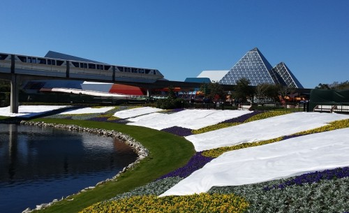 epcot frost