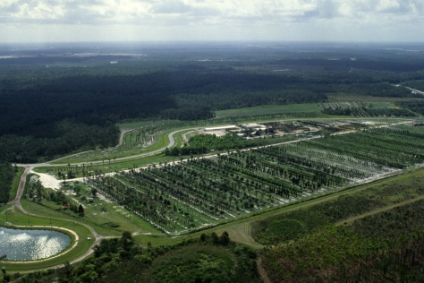 The massive Disney Tree Farm from the air.