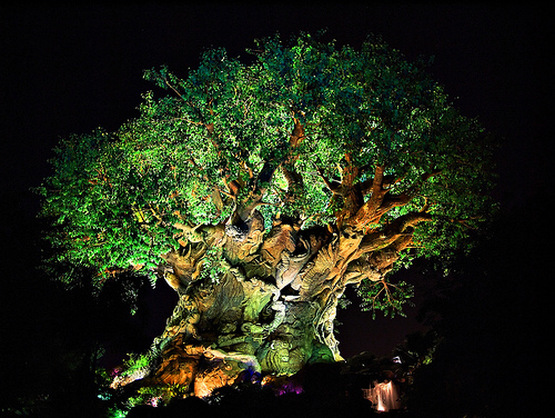 The Tree of Life at night.