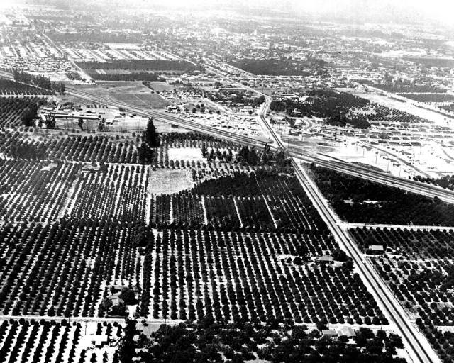 """""""I first saw the site for Disneyland back in 1953. In those days it was all flat land—no rivers, no mountains, no castles or rocket ships—just orange groves, and a few acres of walnut trees."""" - Walt Disney"""