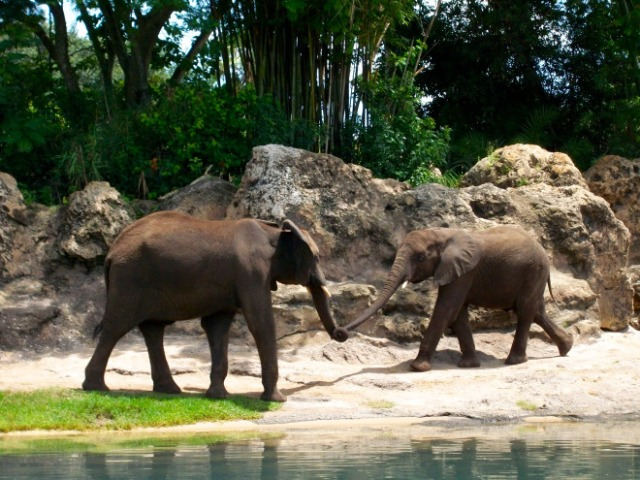 I love this photo of the elephants playing that I took during a safari ride.