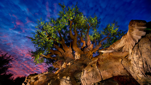 tree of life gallery01