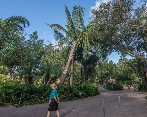 animal-kingdom-irma-5
