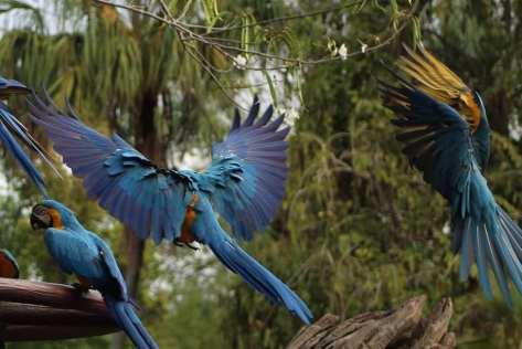bird  DAK