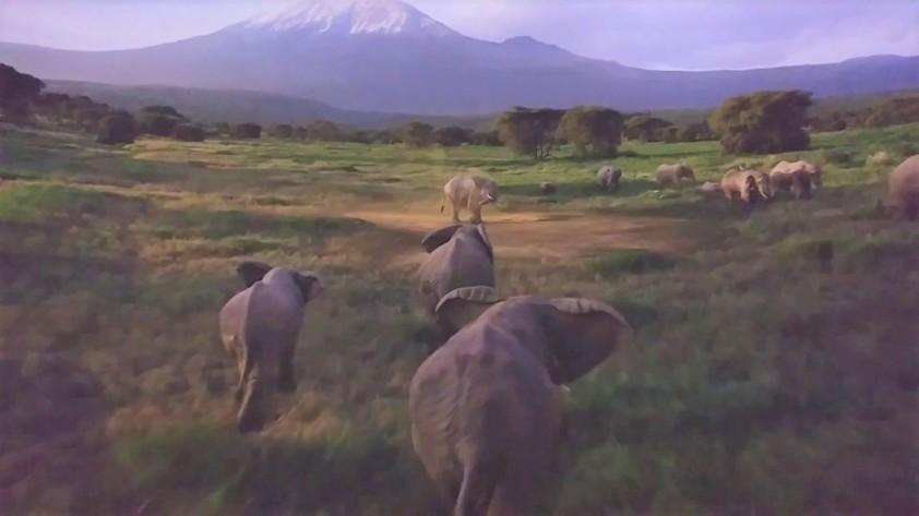 soarin elephant