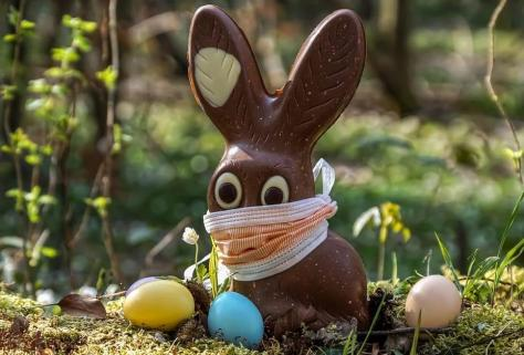 quarantine rabbit virus