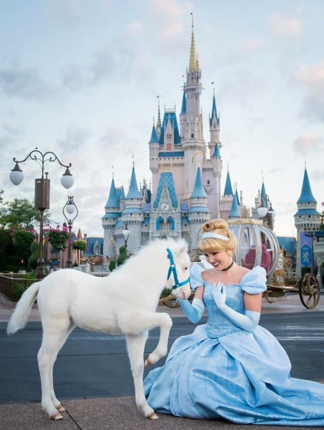 Cinderella's horse